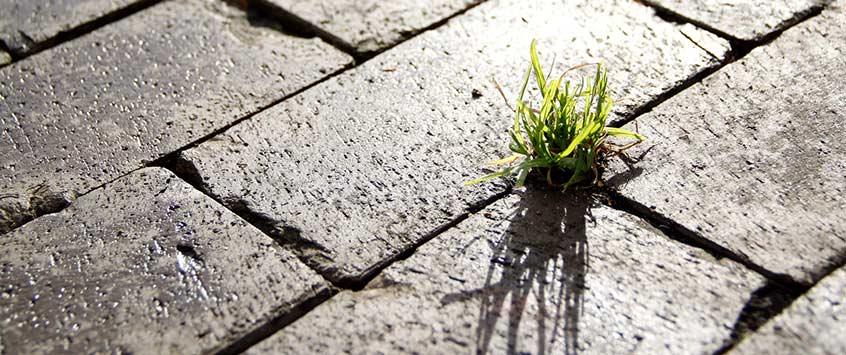 Як захистити тротуарну плитку від проростання бур'янів?